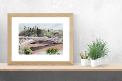 Shelf Plants Kings Bridge Launceston